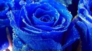 fantasy-flowers-flowers-32897454-1366-768