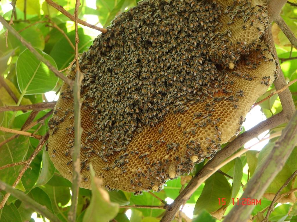 hive-15-11-bigger-but-less-bees